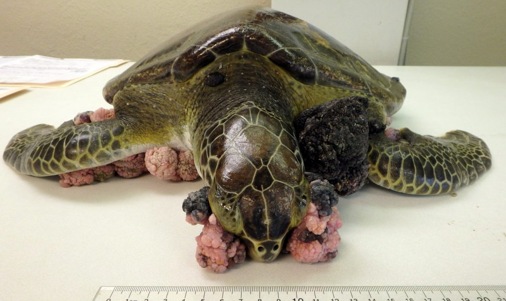 Image from The Turtle Hospital