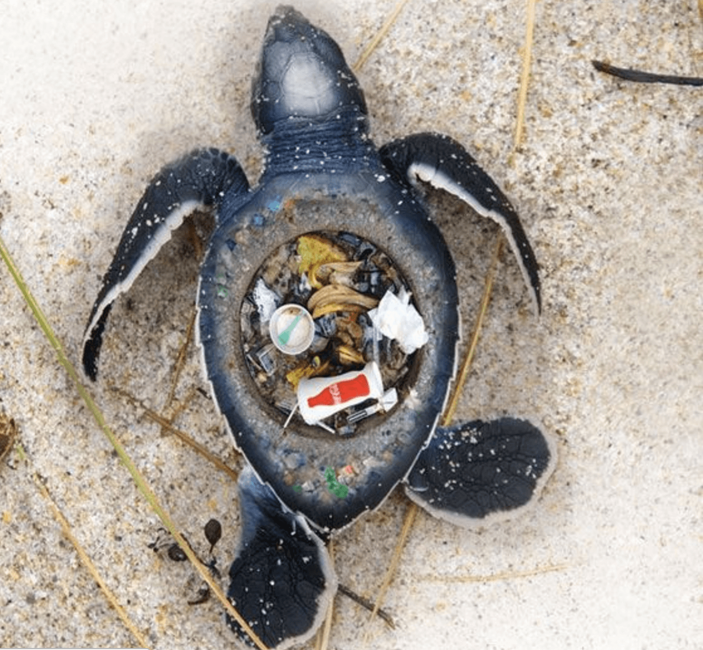 ocean and plastic But there are opportunities to cash in on the ocean economy, a major report for the uk government says.