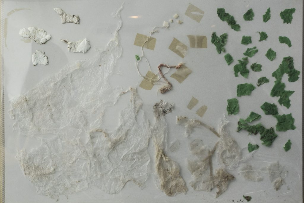 Plastic taken out from the sea turtle. Image from the Kumejima Turtle Museum.