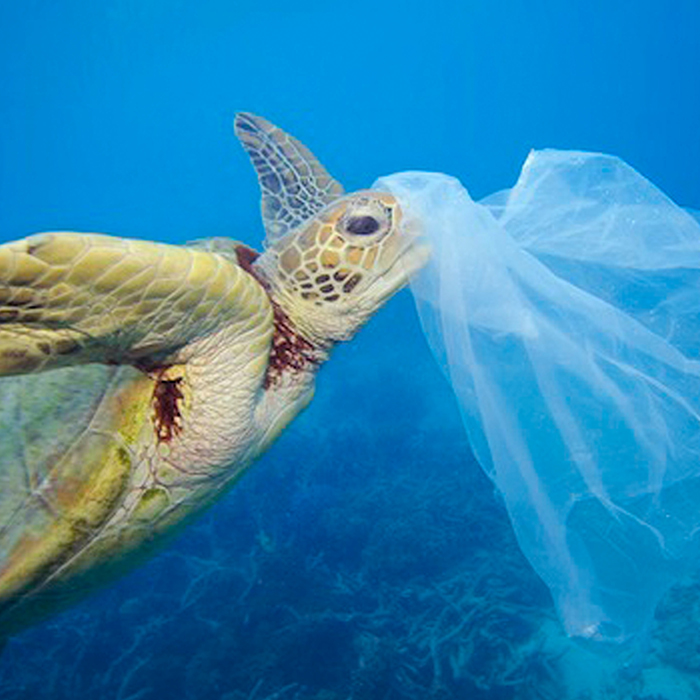 Okinawa Sea Turtles aware-plastic-bag