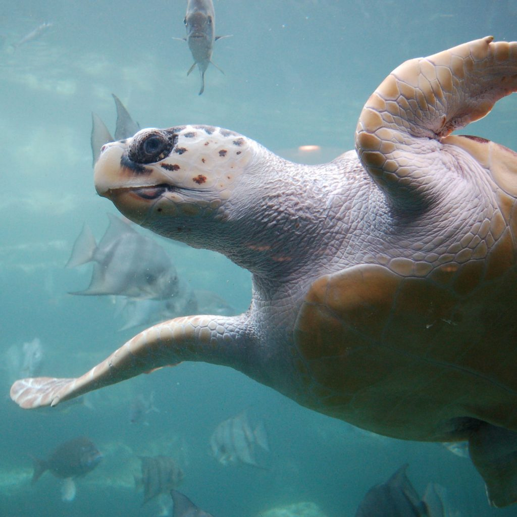 Japan Sea Turtles