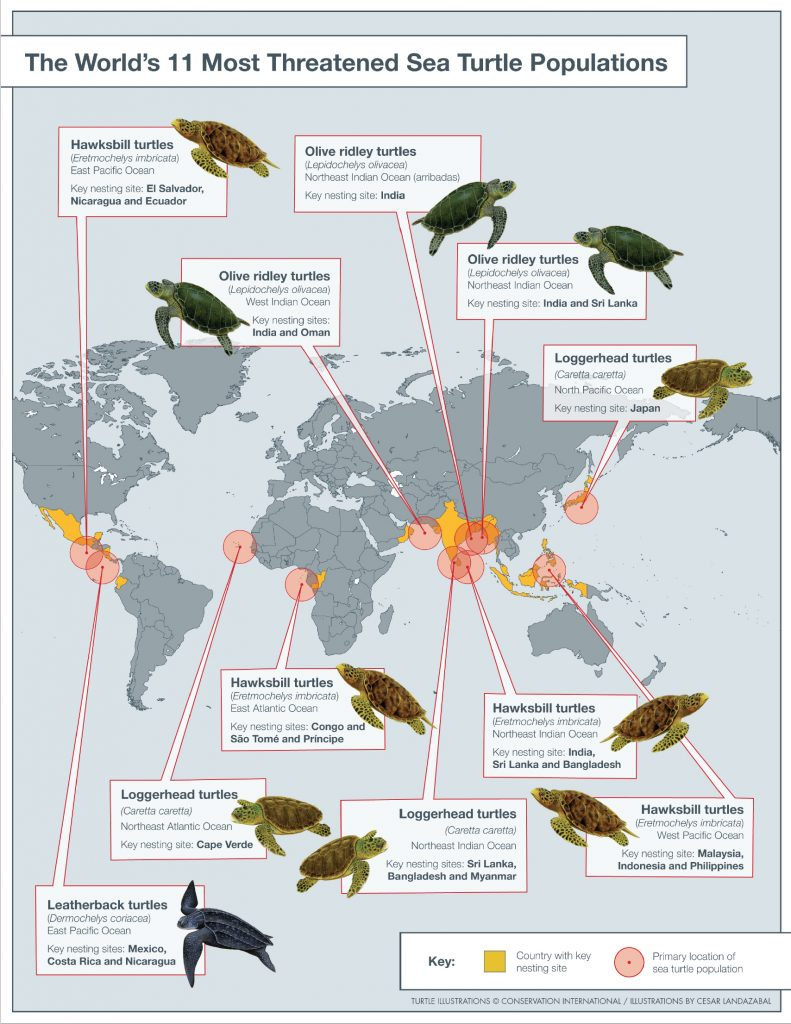 sea turtle conservation priority